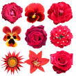 Red flowers — Stock Photo #45319257