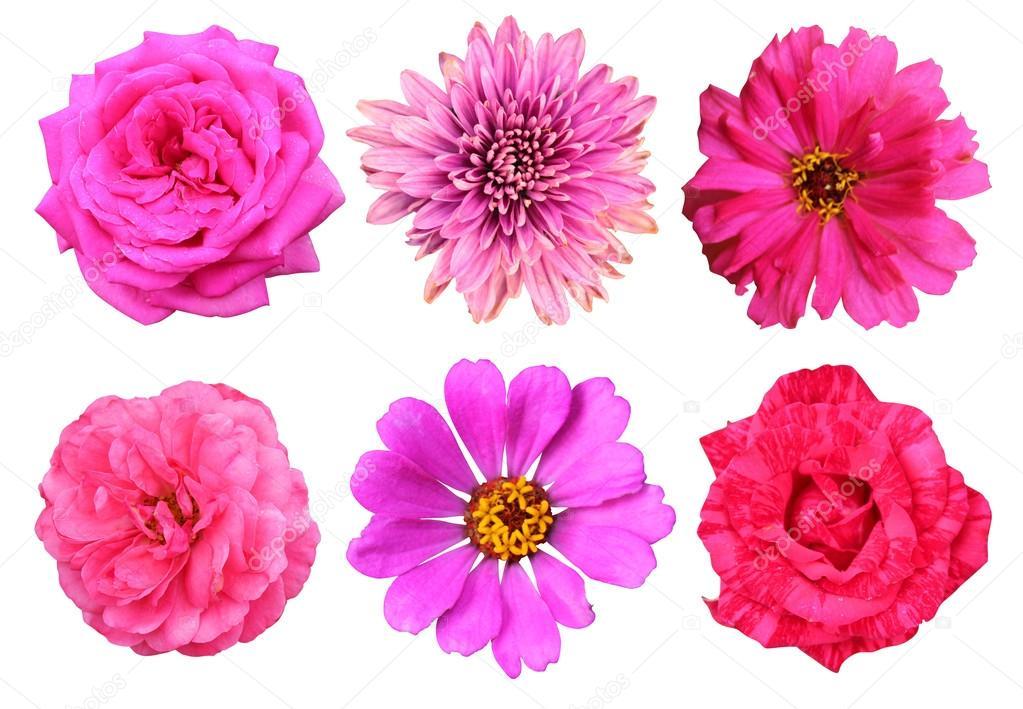 美丽的粉红色花,玫瑰