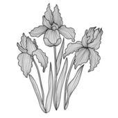 Decorative iris flowers — Stock Vector