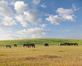 Horses on pasture in summer day — Stock Photo