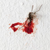 Killed mosquito on a wall — Stock Photo