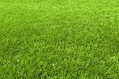 Grass background — 图库照片