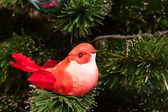 Red bird — Стоковое фото