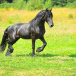 Stock Photo: Black horse runs trot on meadow