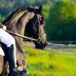 Black Friesian horse in the sunset with rider — Stock Photo #12359312