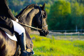 Black Friesian horse in the sunset with rider — Stock Photo