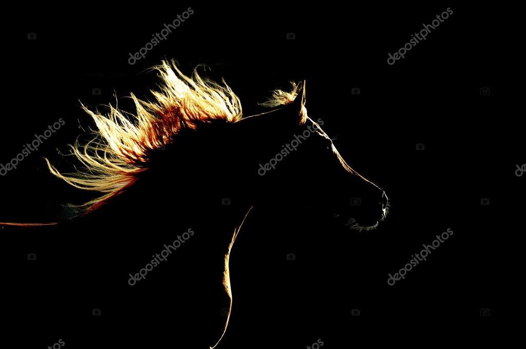 Arabian Horse Backgrounds Arabian Horse Silhouette on