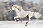 White horse runs gallop in winter, blur motion — Stock Photo