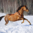 Royalty-Free Stock Photo: Golden red horse runs gallop in winter time