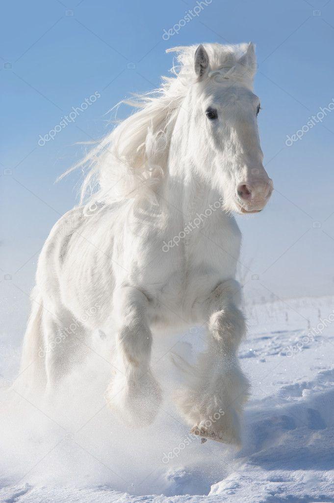 Картинки белой лошади зимой