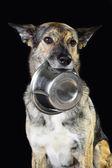 Misture o cão faminto de raça e a tigela, isolado no preto — Foto Stock