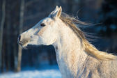 White horse portrait in motion — Stock Photo