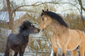 Horse and pony in love — Stock Photo