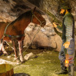 Stockfoto: Miner and horse in WieliczkSalt Mine, Poland.