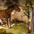 Stock Photo: Miner and horse in WieliczkSalt Mine, Poland.