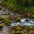 Creek in forest — Stock Photo #19739839