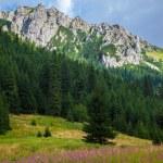 Tatra Mountains landscape — Stock Photo