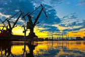 Great Cranes — Stock Photo