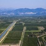 Vineyard in Croatia — Stock Photo #50309429