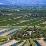 Vineyard in Croatia — Stock Photo #50309453