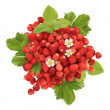 Handful of wild strawberries - Stock Photo