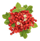 Handful of wild strawberries — Stock Photo