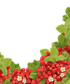 Wild strawberry corner — Stock Photo