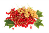 Red and white currant with leaves — Stock Photo