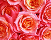 Background with roses — Stock Photo