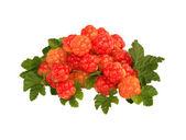 Fresh cloudberry — Stock Photo
