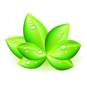 Vector green leaf with water drops — Stock Vector