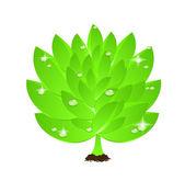 Vetor verde folha com gotas de água — Vetorial Stock