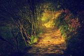 Forêt profonde brumeux, soleil — Photo