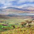 Stock Photo: Savannah landscape in Tanzania, Africa