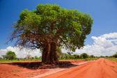 Baobab tree on red soil road, Kenya, Africa — Stock Photo