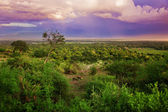Bush in Tanzania, Africa landscape — Stock Photo