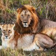 Male lion and female lion. Safari in Serengeti, Tanzania, Africa — Stock Photo