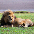 Stock Photo: Big lion on savanna. Safari in Serengeti, Tanzania, Africa