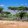 Savanna landscape in Africa, Serengeti, Tanzania — Stock Photo #19231019