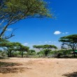 Savanna landscape in Africa, Serengeti, Tanzania — Stock Photo #19231029