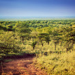 Stock Photo: Serengeti savannlandscape in Tanzania, Africa.