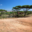 Savanna landscape in Africa, Serengeti, Tanzania — Stock Photo #19231103