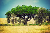 Savanna landscape in Africa, Serengeti, Tanzania — Stock Photo