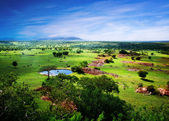Savanna in bloom, in Tanzania, Africa panorama — Foto Stock