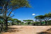 Paesaggio della savana in africa, serengeti, tanzania — Foto Stock