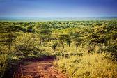 Serengeti savanna landscape in Tanzania, Africa. — Stock Photo