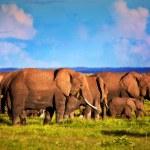 Elephants herd on savanna. Safari in Amboseli, Kenya, Africa — Stock Photo