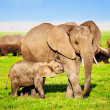 Elephants family on savanna. Safari in Amboseli, Kenya, Africa — Stock Photo