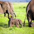 Elephants family on savanna. Safari in Amboseli, Kenya, Africa — Stock Photo #20386443