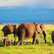 Elephants family on savanna. Safari in Amboseli, Kenya, Africa — Stock Photo